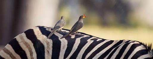 Cites African Safaris