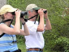 birdwatchers safari